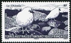 French Antarctic Stamps - Sc. # 440 - Chionis Bird