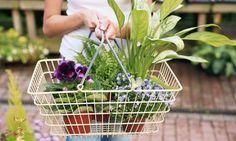 Comprar plantas de interior // Shopping