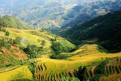 Rice terrace field, Sapa