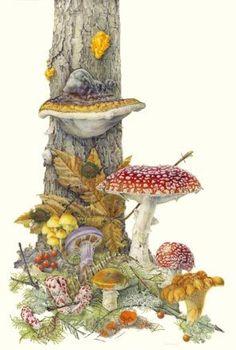 Island Botanical Artist Jean Emmons Goes For Royal Horticultural Society Gold Jean Emmons Botanical ArtJean Emmons Botanical Art Vintage Botanical Prints, Botanical Drawings, Botanical Art, Mushroom Drawing, Mushroom Art, Art And Illustration, Illustrations, Illustration Botanique, Art Graphique