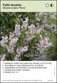 deutzia scabra flore pleno - Google Search