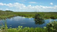 Everglades threatened by sea level rise
