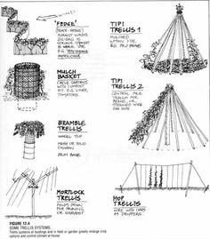 "TRELLIS DESIGNS: ""Fedge,"" Tipi Trellises, Mulch Basket, Bramble Trellis, Mortlock Trellis, Hop Trellis. #livingecology #permacultureinternship"