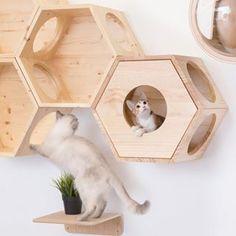 myzoojapan ~ cat walk / cat shelves