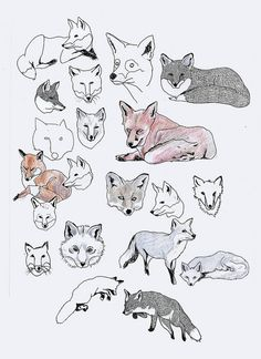 fox drawings