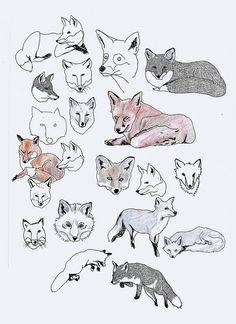 fox drawings