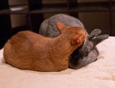 Cat & bunny are friends