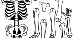 esqueleto-para-armar.gif
