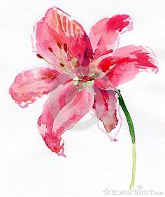 View top-quality illustrations of Watercolor Lily. Find premium, high-resolution illustrative art at Getty Images. Tree Watercolor Painting, Watercolor Pictures, Watercolor Projects, Watercolor Tips, Watercolor Cards, Watercolor Background, Watercolor Landscape, Watercolor Flowers, Watercolor Portraits