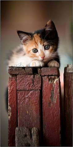 Sweet calico cat