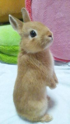 Cute Bunny Pictures, Baby Animals Pictures, Cute Animal Photos, Animals And Pets, Funny Animals, Baby Animals Super Cute, Cute Baby Bunnies, Cute Little Animals, Cute Babies