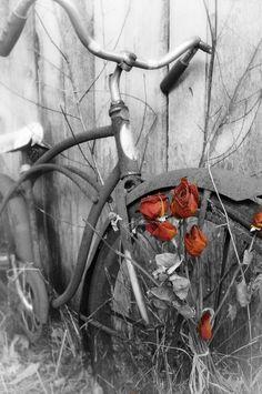PHOTOGRAPHY ~ ColorSplashOranges
