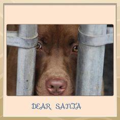 SOOOOO SAD... Dog adoption please help!!! I've already got two but would take 4 million if I had the money