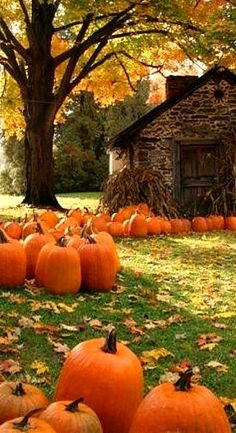 ♥︎I WANT this many pumpkins in my yard too!
