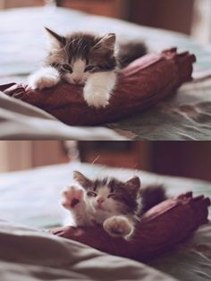 kitty stretch...so cute! ん〜っ半分くらい終わった…