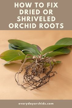Indoor Orchids, Orchids Garden, Garden Plants, Indoor Plants, House Plants, Indoor Garden, Orchid Roots, Orchid Leaves, Orchid Flowers