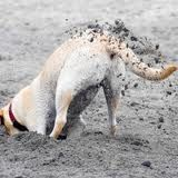 silly yellow lab images - Google Search