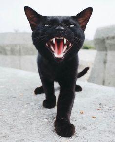 Roar!!!