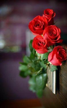 31 ideas wallpaper floral vermelho for 2019 Beautiful Flowers Wallpapers, Beautiful Red Roses, Romantic Roses, Amazing Flowers, Pretty Flowers, Rose Images, Flowers Nature, Flower Wallpaper, Flower Arrangements