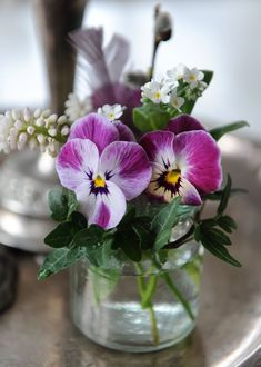 sweet little pansies