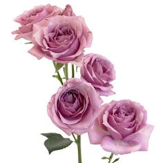 FiftyFlowers.com - Pinky Lavender Spray Roses - 8 Bunches for $109.99 #ColoroftheYear2014