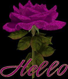 purple  rose - hello