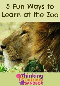 5 Fun Ways to Learn at the Zoo