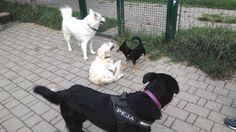 03/09/2015 - Torino con Temi, Bobby e Peja