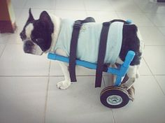 DIY : Dog Wheelchair.