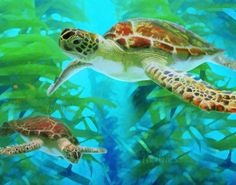 Green Sea Turtle II Fine Art Print Matted or by MMBPhotoGraphics, $20.00