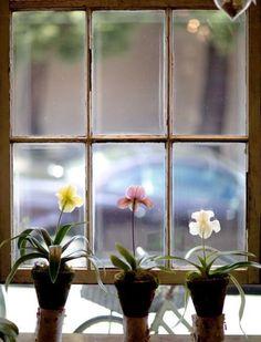 Trois fleurs contemplatives