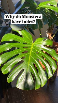 House Plants Decor, Plant Decor, Planting Succulents, Planting Flowers, Inside Plants, House Plant Care, Bedroom Plants, Outdoor Plants, Green Plants