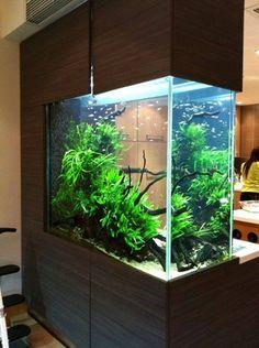 . Aquarium Design, Aquascaping, Aquarium Fish Tank, Betta Fish, Color Schemes, Projects To Try, Sweet Home, Layout, Interiors