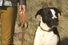 tanner goods | dog collar and lead