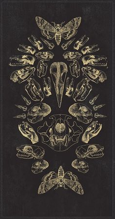 natural history art featuring skulls...scratchboard?