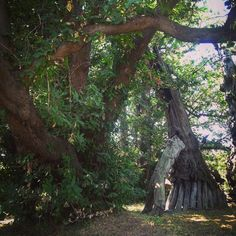 Chestnut of the 100 Horses where Admiral Nelson visited #tree #garden #history #travel #sicily #italy #nature