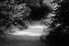 Dig photo bridge