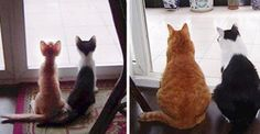 30 incríveis fotos antes e depois de gatos crescendo