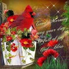 Happy Good Morning Images, Good Morning Picture, Good Morning Friends, Good Morning Good Night, Morning Pictures, Good Morning Wishes, Morning Blessings, Morning Pics, Morning Thoughts