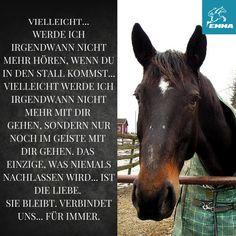 Pferdesprüche & online horse supplies-emma-pferdefuttershop.de (10)