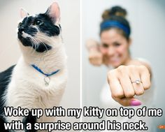 My future husband better include my cat in his proposal or our wedding lol :p