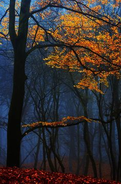 4nimalparty: by Lars van de Goor Pretty yellow and orange fall leaves on trees in the forest