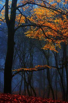 Dark Forest, The Netherlands photo by larsvandegoor