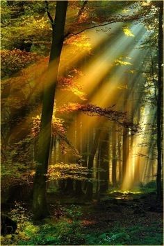 ~~ Forest Sunshine ~~ sun, sunlight, sun shine, woods, forest, tree, trees, green, beautiful view, nature, yellow