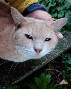 にゃ、って呼び止められて 振り向いたらこの子。 テケテケやって来て 「撫でて。」 って云うから撫でる。 でもって 「その四角いのはナニ?」 って訊くから 「カメラだよ。」 そう教えておきました。   #cat #neko #猫