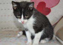 Rozkoszne, 3 miesięczne kociaki szukają domów