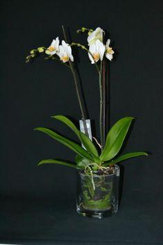 1000 images about orqu deas on pinterest orchids - Maceta para orquideas ...