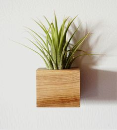 Air Plant & Magnetic Planter | want this for our fridge or on my file cabinet