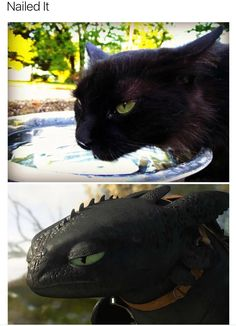 black cats that are actually toothless in disguise funny animal photos, funny animal Really Funny Memes, Funny Animal Memes, Cute Funny Animals, Funny Cats, Funny Stuff, Dragon Memes, Funny Animal Photos, Animal Pics, How To Train Dragon