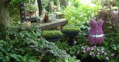 Color in the Shade Garden